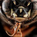 Como aumentar o tamanho e produtividade das abelhas e da colmeia