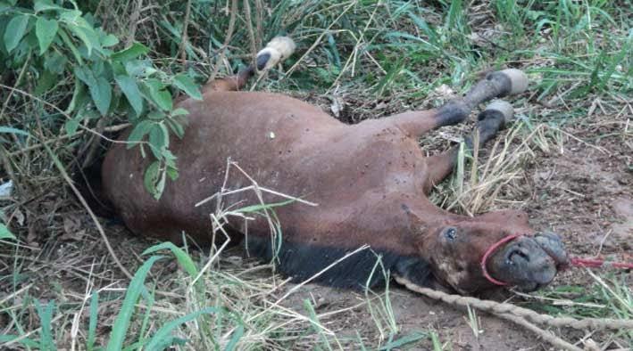 O Ataque de Abelhas Africanas pode ser Mortal. Muito cuidado com o manuseio da espécie!
